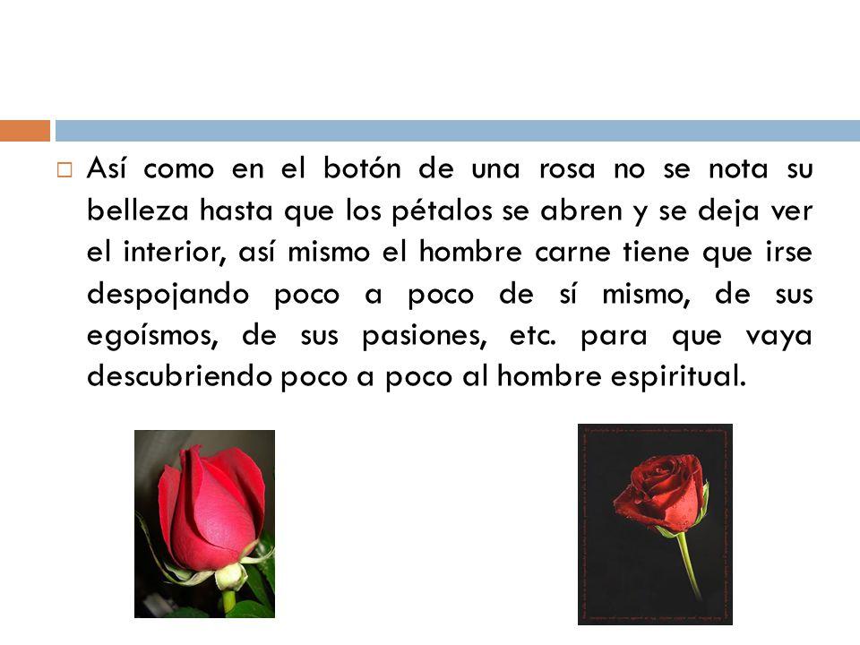 Así como en el botón de una rosa no se nota su belleza hasta que los pétalos se abren y se deja ver el interior, así mismo el hombre carne tiene que i