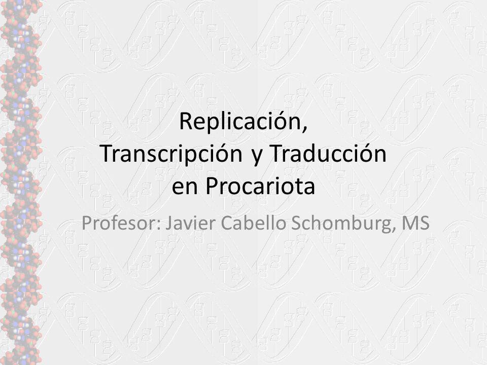 Replicación, Transcripción y Traducción en Procariota Profesor: Javier Cabello Schomburg, MS