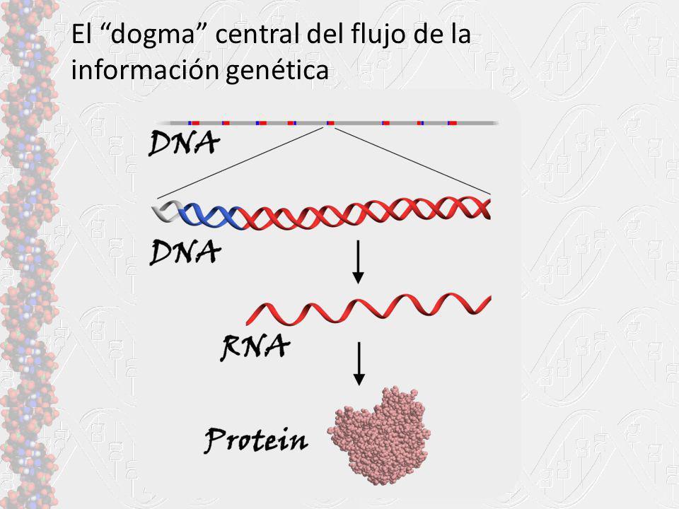 El dogma central del flujo de la información genética