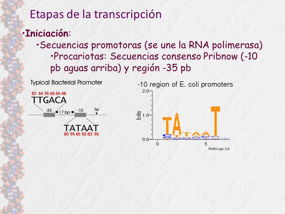 Etapas de la transcripción Iniciación: Secuencias promotoras (se une la RNA polimerasa) Procariotas: Secuencias consenso Pribnow (-10 pb aguas arriba)