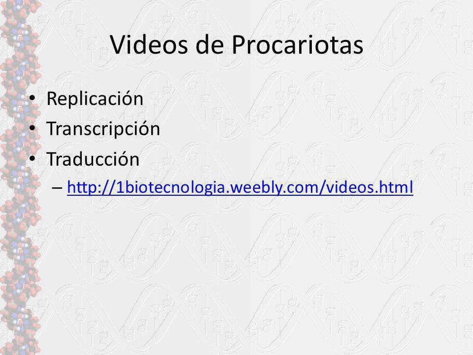 Videos de Procariotas Replicación Transcripción Traducción – http://1biotecnologia.weebly.com/videos.html http://1biotecnologia.weebly.com/videos.html