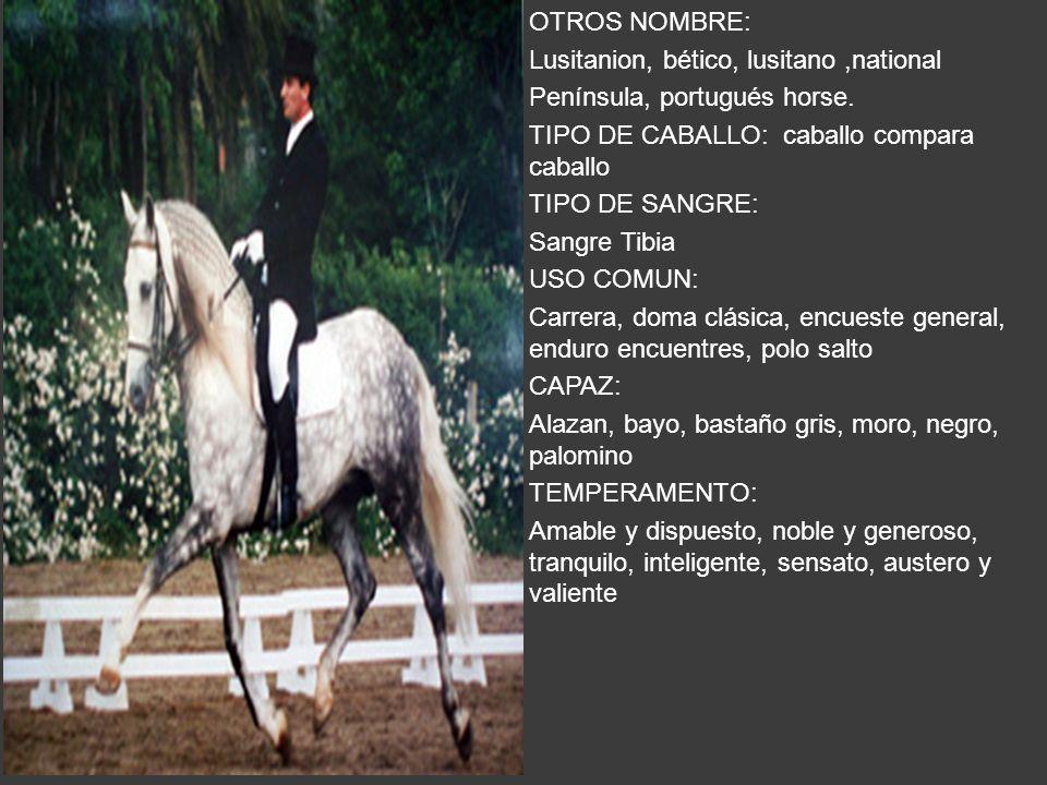 OTROS NOMBRE: Lusitanion, bético, lusitano,national Península, portugués horse. TIPO DE CABALLO: caballo compara caballo TIPO DE SANGRE: Sangre Tibia