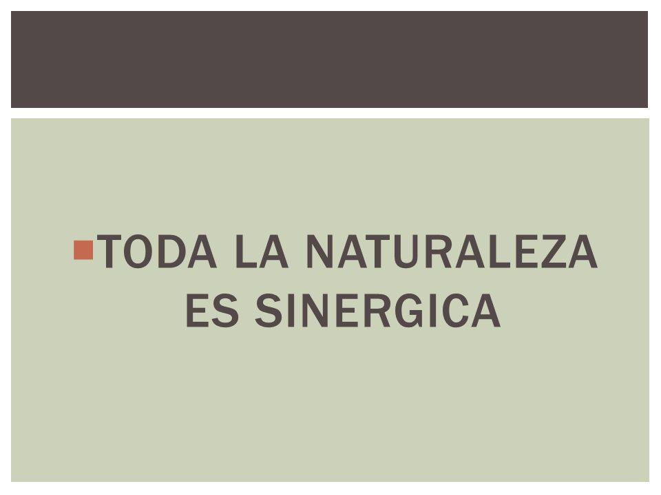 TODA LA NATURALEZA ES SINERGICA