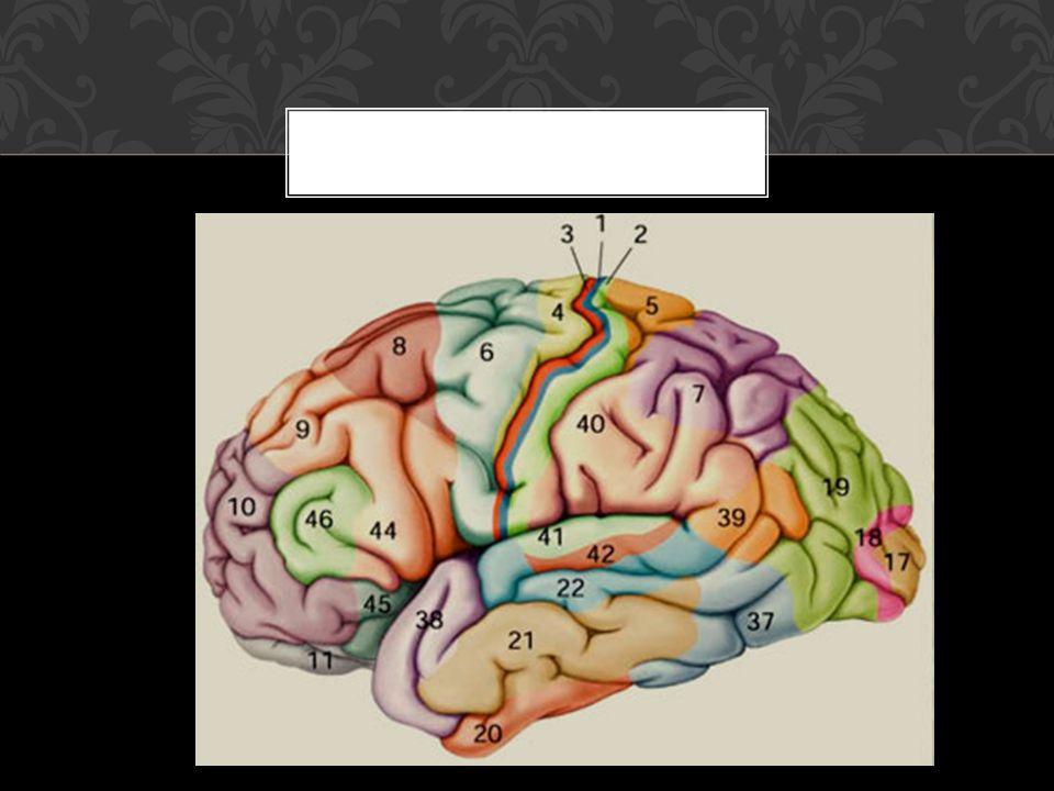 *Secuenciación y ordenación temporal de acontecimientos: presentan incapacidad para seguir, detectar y aprender secuencias verbales,, motoras o conductuales (Gomez et al.