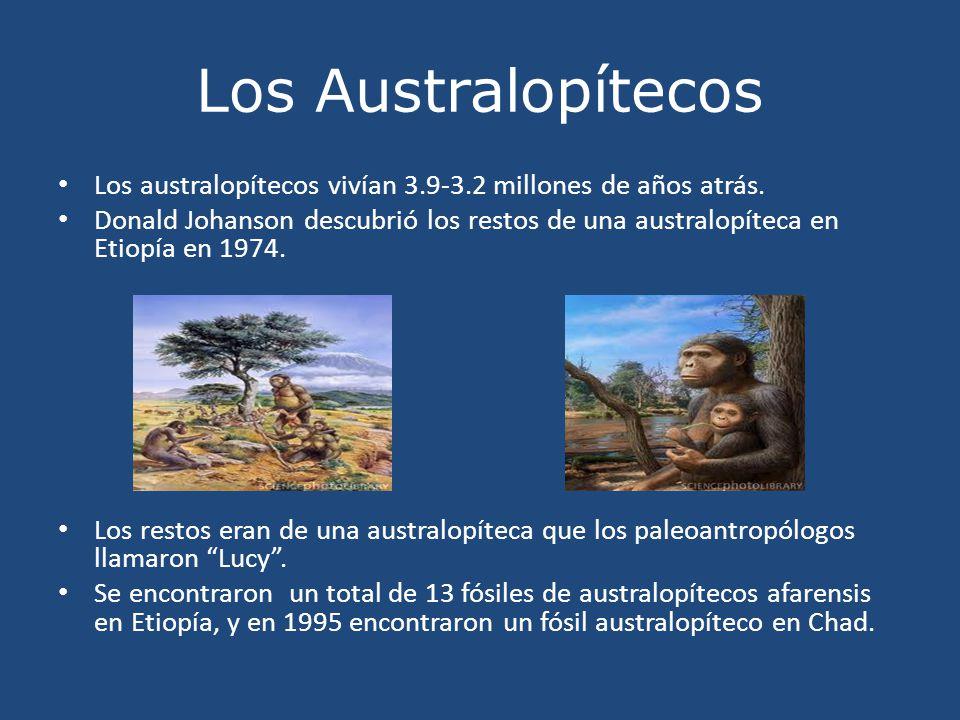 Los Australopítecos Los australopítecos vivían 3.9-3.2 millones de años atrás. Donald Johanson descubrió los restos de una australopíteca en Etiopía e