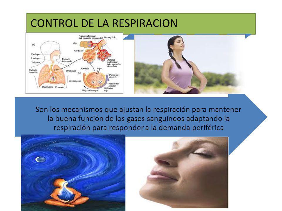 CONTROL DE LA RESPIRACION Son los mecanismos que ajustan la respiración para mantener la buena función de los gases sanguíneos adaptando la respiració