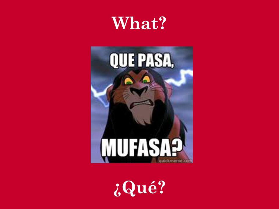 What? ¿Qué?