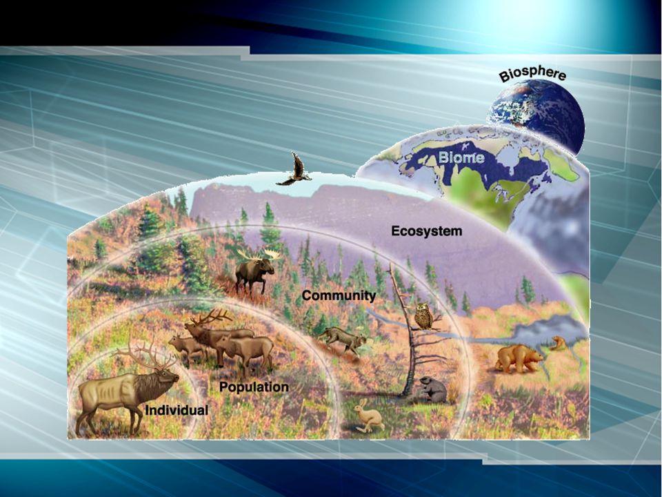 Cadena alimentaria Carnívoros de segundo nivel Carnívoros de primer nivel Herbívoros Descomponedore s Productores