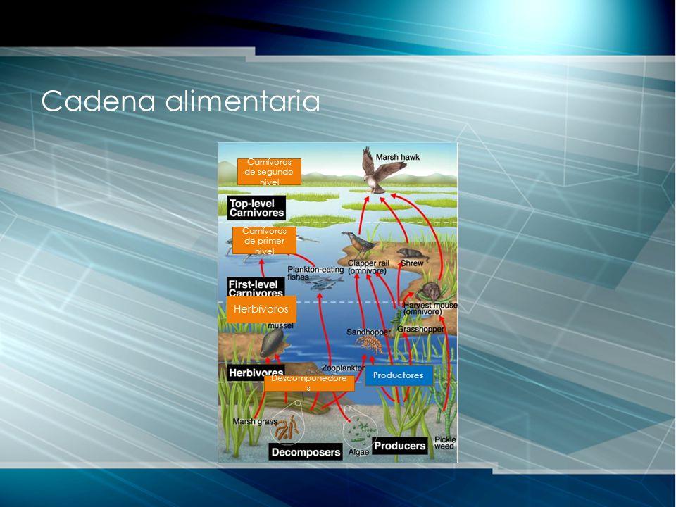 Ciclo del agua Condensación filtrado caída Precipitación Transpiración Evaporación Plantas