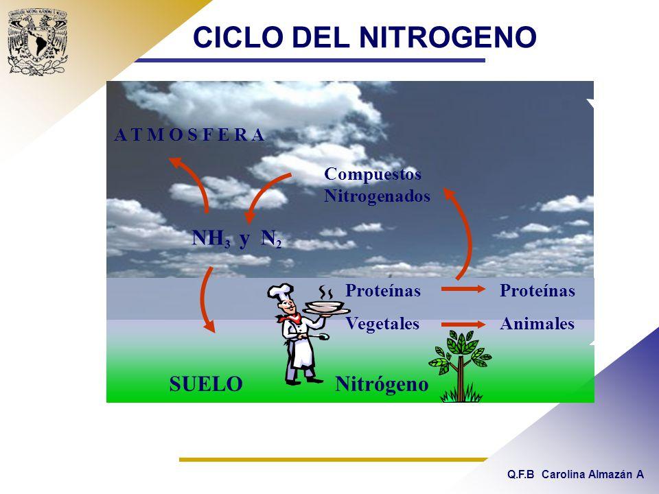 Q.F.B Carolina Almazán A CICLO DEL NITROGENO Nitrógeno Proteínas Vegetales Proteínas Animales Compuestos Nitrogenados SUELO N2N2 NH 3 y A T M O S F E R A