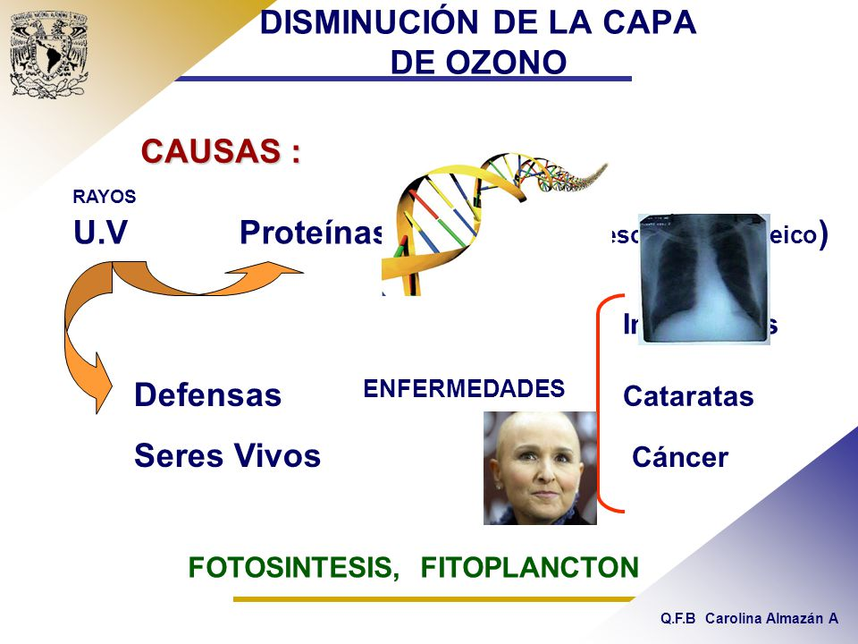 Q.F.B Carolina Almazán A DISMINUCIÓN DE LA CAPA DE OZONO CAUSAS : Defensas Seres Vivos ENFERMEDADES Infecciosas Cataratas Cáncer FOTOSINTESIS, FITOPLANCTON U.V Proteínas y ADN ( ácido desoxirribonucleico ) RAYOS