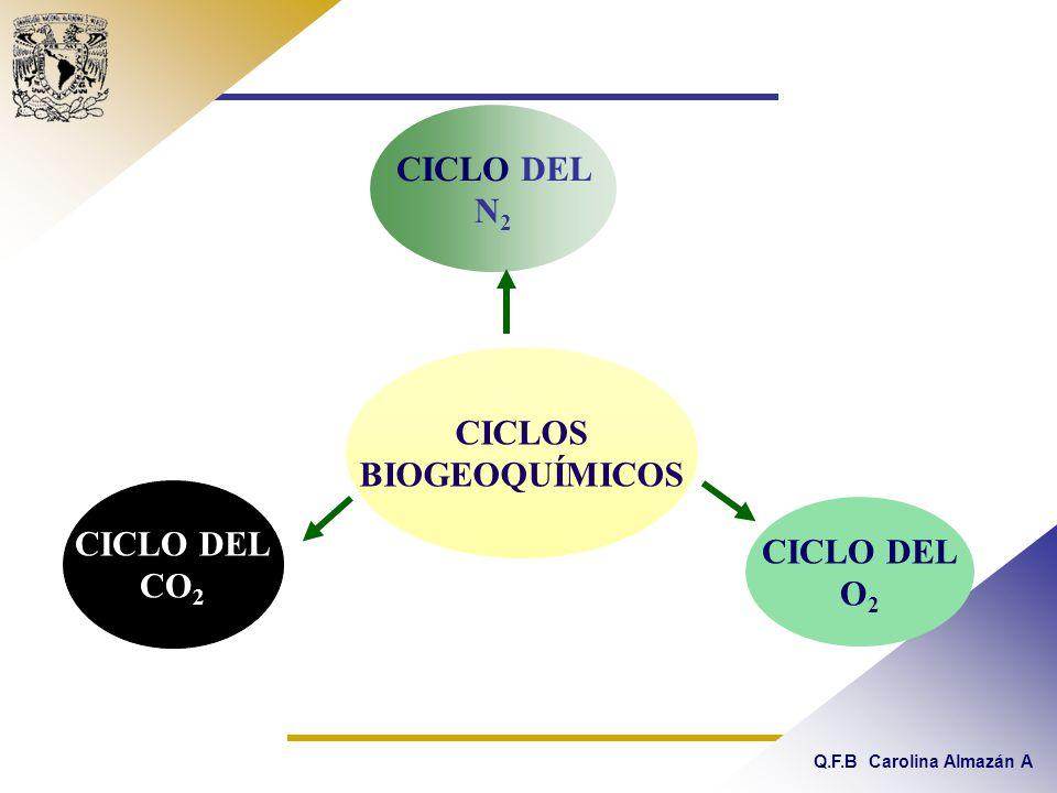 Q.F.B Carolina Almazán A CICLO DEL N 2 CICLOS BIOGEOQUÍMICOS CICLO DEL CO 2 CICLO DEL O 2