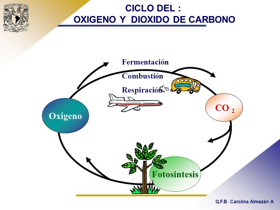 Q.F.B Carolina Almazán A CICLO DEL : OXIGENO Y DIOXIDO DE CARBONO Fotosintesis Oxígeno Fermentación Combustión Respiración CO 2