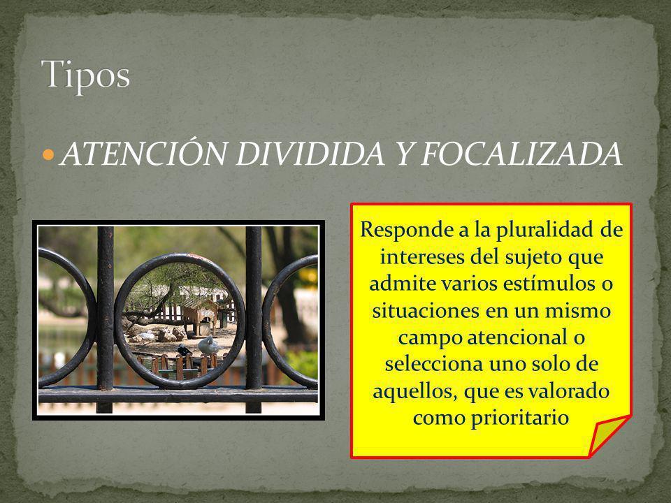 ATENCIÓN DIVIDIDA Y FOCALIZADA Responde a la pluralidad de intereses del sujeto que admite varios estímulos o situaciones en un mismo campo atencional