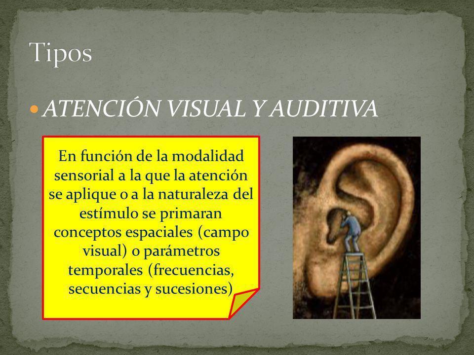 ATENCIÓN VISUAL Y AUDITIVA En función de la modalidad sensorial a la que la atención se aplique o a la naturaleza del estímulo se primaran conceptos espaciales (campo visual) o parámetros temporales (frecuencias, secuencias y sucesiones)