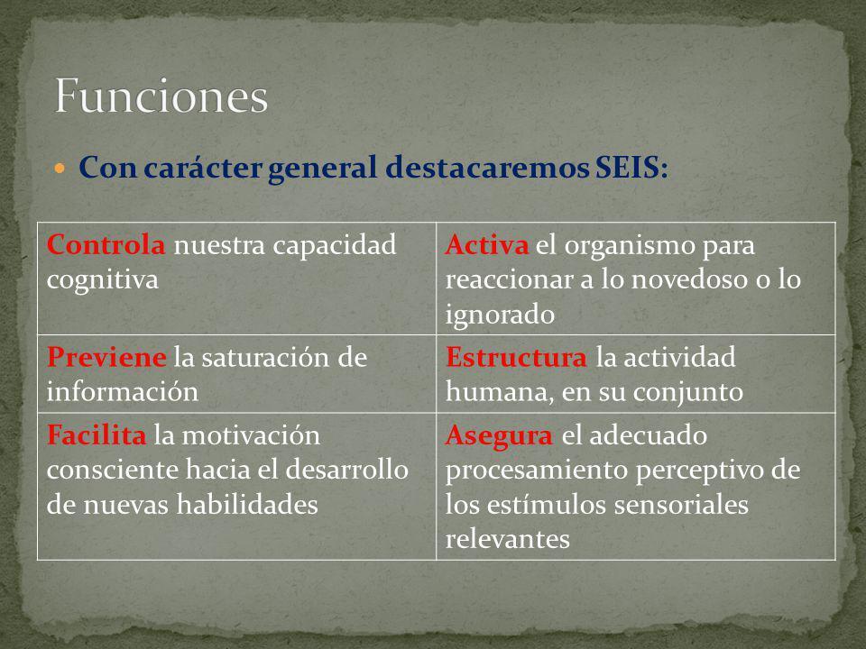 Con carácter general destacaremos SEIS: Controla nuestra capacidad cognitiva Activa el organismo para reaccionar a lo novedoso o lo ignorado Previene