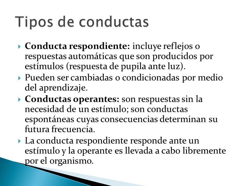Conducta respondiente: incluye reflejos o respuestas automáticas que son producidos por estímulos (respuesta de pupila ante luz). Pueden ser cambiadas