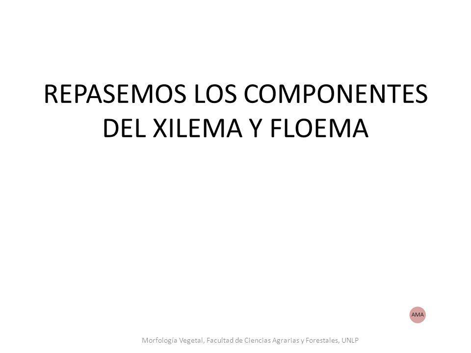 REPASEMOS LOS COMPONENTES DEL XILEMA Y FLOEMA Morfología Vegetal, Facultad de Ciencias Agrarias y Forestales, UNLP