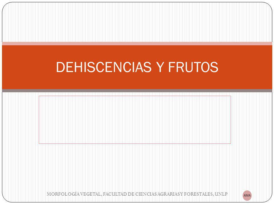 DEHISCENCIAS Y FRUTOS MORFOLOGÍA VEGETAL, FACULTAD DE CIENCIAS AGRARIAS Y FORESTALES, UNLP
