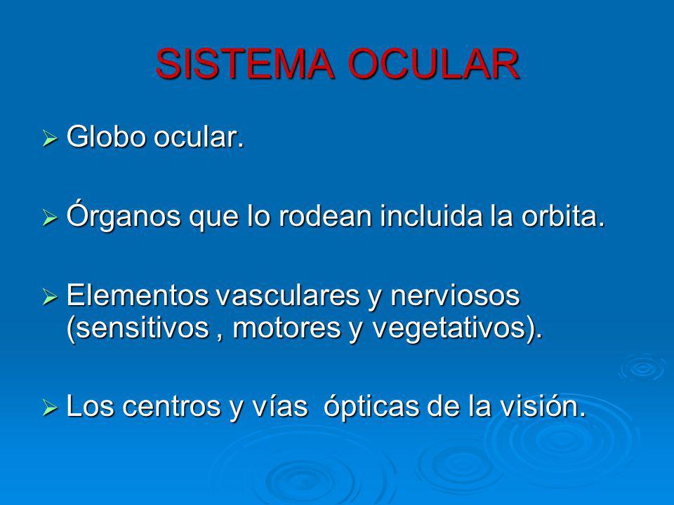 LiMBO ESCLERO - CORNEAL a) Malla trabecular o trabeculum b) Corneal Schlemm.