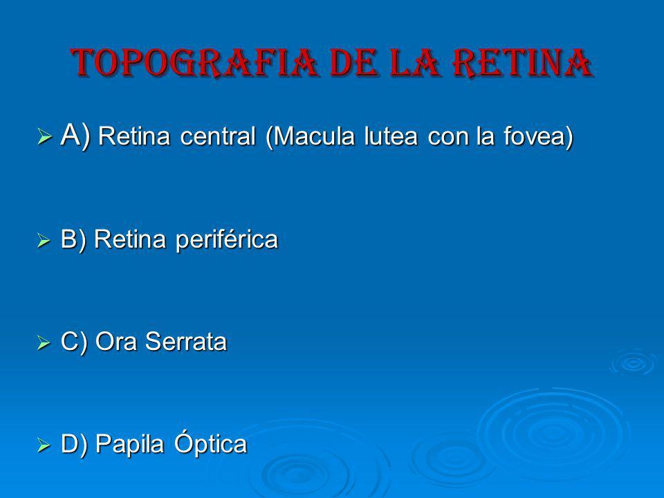 TOPOGRAFIA DE LA RETINA A) Retina central (Macula lutea con la fovea) A) Retina central (Macula lutea con la fovea) B) Retina periférica B) Retina periférica C) Ora Serrata C) Ora Serrata D) Papila Óptica D) Papila Óptica