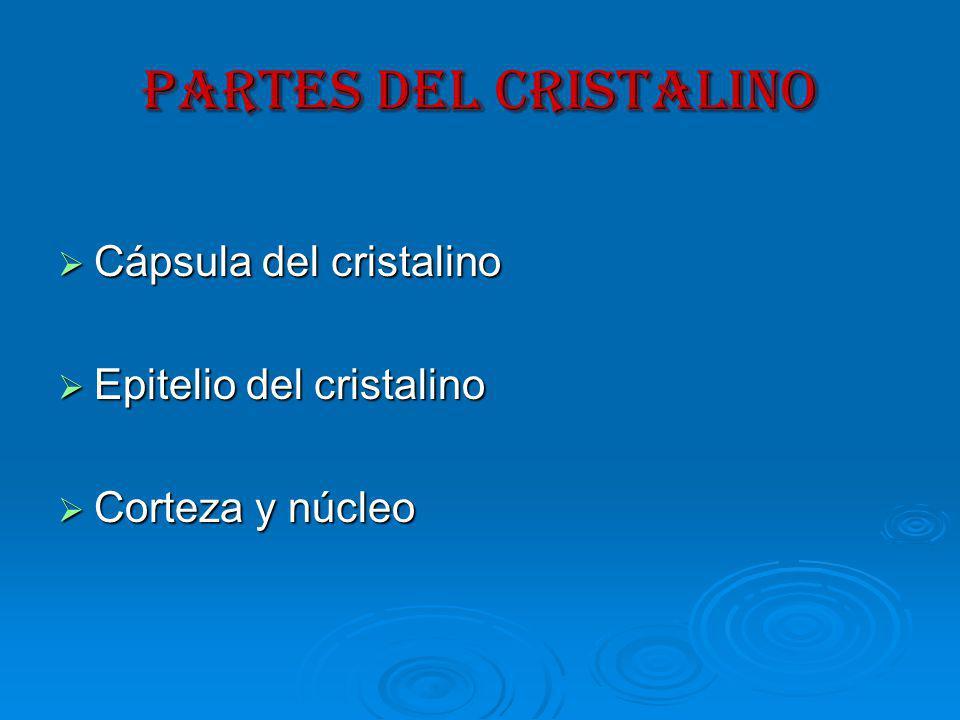 PARTES DEL CRISTALINO Cápsula del cristalino Cápsula del cristalino Epitelio del cristalino Epitelio del cristalino Corteza y núcleo Corteza y núcleo