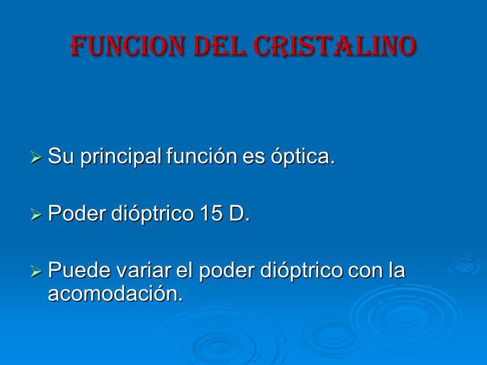 FUNCION DEL CRISTALINO Su principal función es óptica.