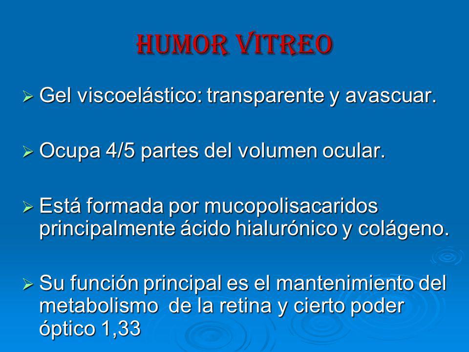 HUMOR VITREO Gel viscoelástico: transparente y avascuar.