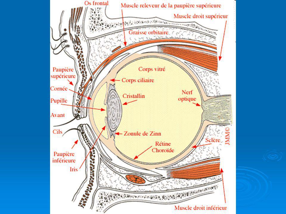 SISTEMA VENOSO Vena central de la retina Vena central de la retina Vena vorticosas Vena vorticosas Vena ciliares anteriores Vena ciliares anteriores