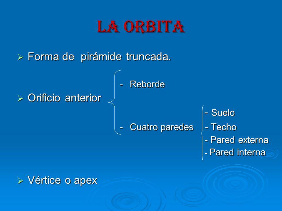 LA ORBITA Forma de pirámide truncada.Forma de pirámide truncada.