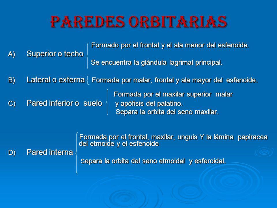 PAREDES ORBITARIAS Formado por el frontal y el ala menor del esfenoide.