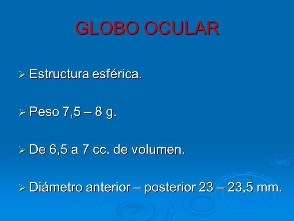 GLOBO OCULAR Estructura esférica.Estructura esférica.