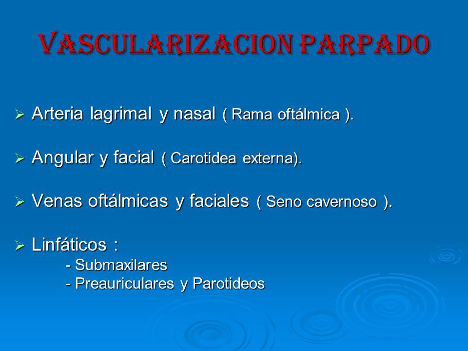 VASCULARIZACION PARPADO Arteria lagrimal y nasal ( Rama oftálmica ).