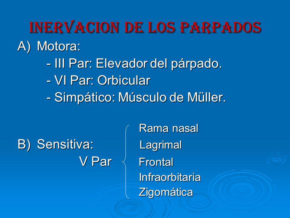 INervacion DE LOS PARPADOS A)Motora: - III Par: Elevador del párpado.