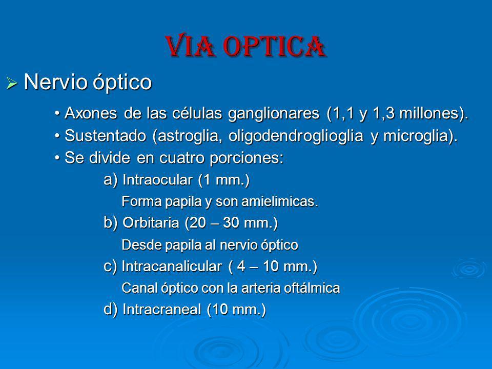VIA OPTICA Nervio óptico Nervio óptico Axones de las células ganglionares (1,1 y 1,3 millones).
