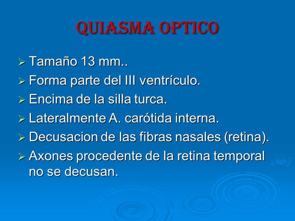 QUIASMA OPTICO Tamaño 13 mm..Tamaño 13 mm.. Forma parte del III ventrículo.