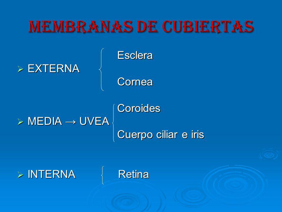 MEMBRANAS DE CUBIERTAS Esclera Esclera EXTERNA EXTERNA Cornea Cornea Coroides Coroides MEDIA UVEA MEDIA UVEA Cuerpo ciliar e iris Cuerpo ciliar e iris INTERNA Retina INTERNA Retina
