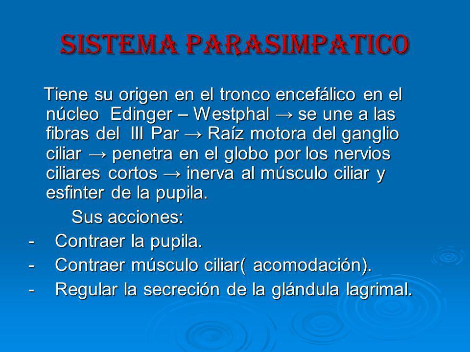 SISTEMA PARASIMPATICO Tiene su origen en el tronco encefálico en el núcleo Edinger – Westphal se une a las fibras del III Par Raíz motora del ganglio ciliar penetra en el globo por los nervios ciliares cortos inerva al músculo ciliar y esfinter de la pupila.