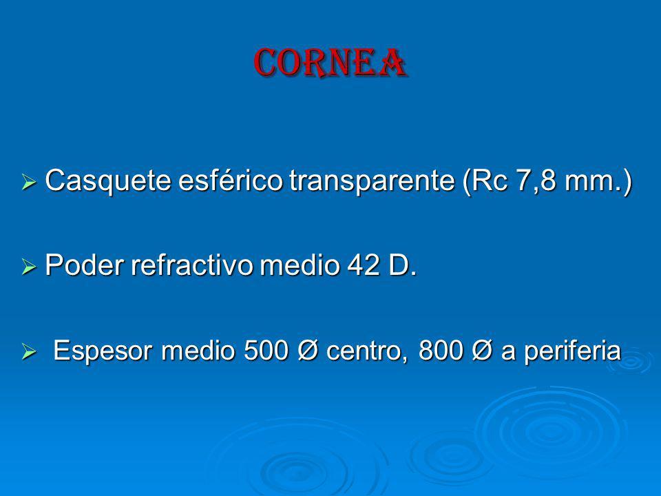 CORNEA Casquete esférico transparente (Rc 7,8 mm.) Casquete esférico transparente (Rc 7,8 mm.) Poder refractivo medio 42 D.