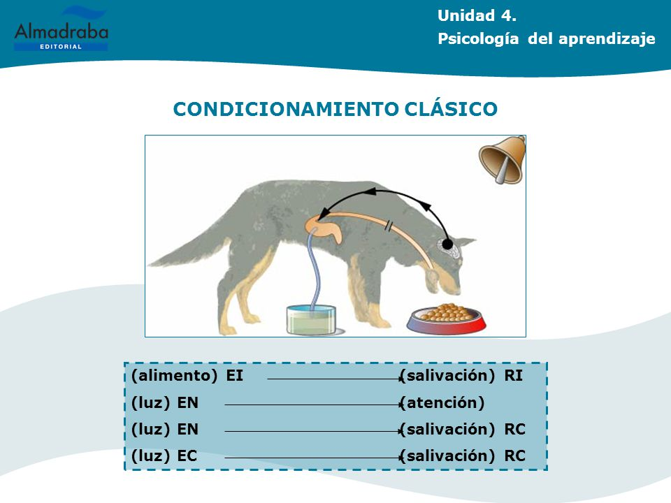 CONDICIONAMIENTO CLÁSICO (alimento) EI(salivación) RI (luz) EN (atención) (luz) EN (salivación) RC (luz) EC (salivación) RC Unidad 4. Psicología del a