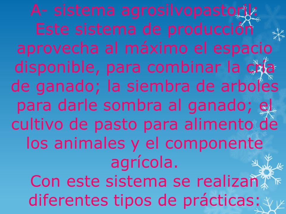 A- sistema agrosilvopastoril: Este sistema de producción aprovecha al máximo el espacio disponible, para combinar la cría de ganado; la siembra de arboles para darle sombra al ganado; el cultivo de pasto para alimento de los animales y el componente agrícola.