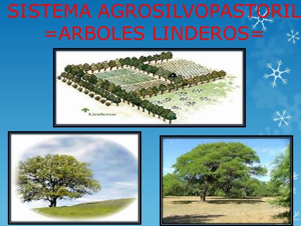 SISTEMA AGROSILVOPASTORIL =ARBOLES LINDEROS=