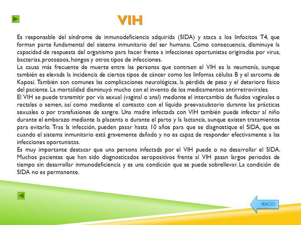 VIH Es responsable del síndrome de inmunodeficiencia adquirida (SIDA) y ataca a los linfocitos T4, que forman parte fundamental del sistema inmunitari