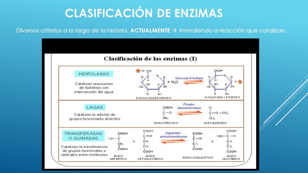 CLASIFICACIÓN DE ENZIMAS Diversos criterios a lo largo de la historia. ACTUALMENTE Atendiendo a reacción que catalizan.
