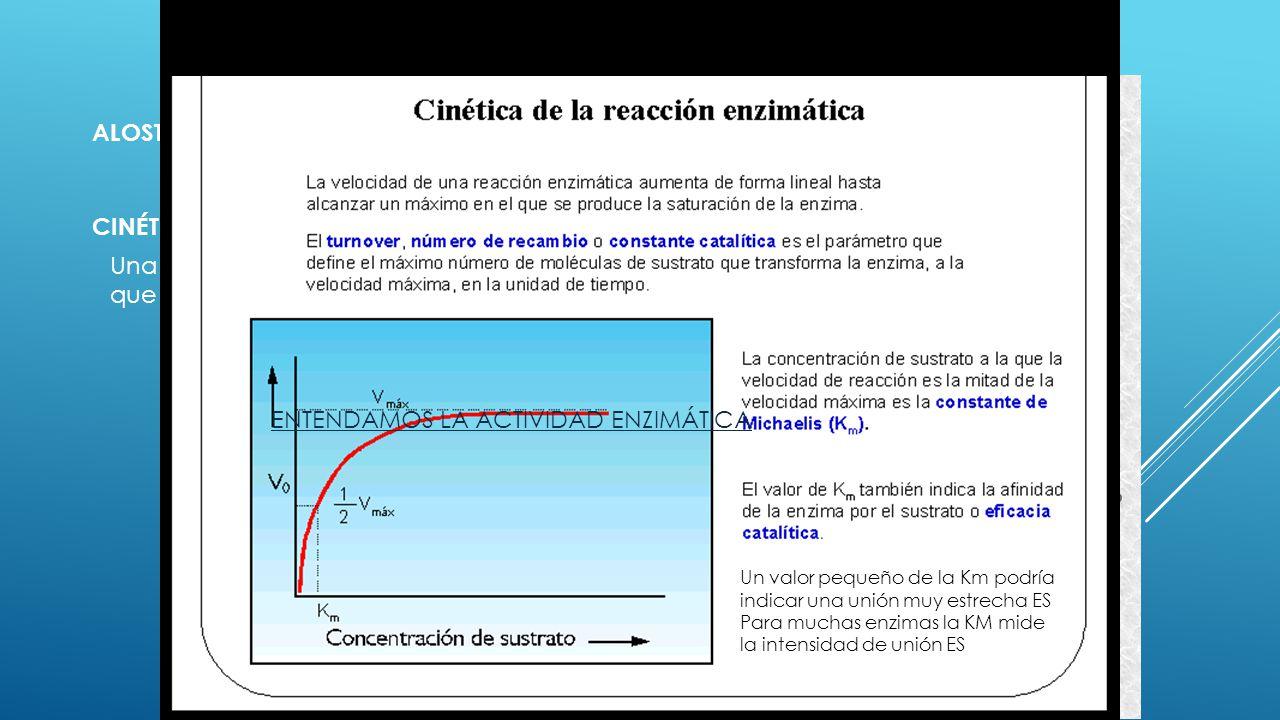 LA REACCIÓN ENZIMÁTICA ALOSTERISMO CINÉTICA ENZIMÁTICA Una enzima tiene un límite en cuanto a cantidad de sustrato que puede transformar por unidad de