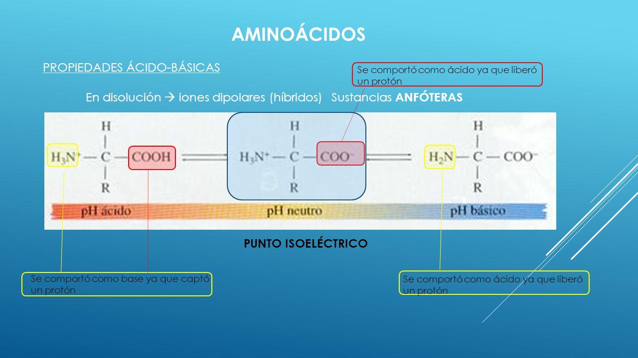 AMINOÁCIDOS PROPIEDADES ÁCIDO-BÁSICAS En disolución iones dipolares (híbridos) Se comportó como ácido ya que liberó un protón Se comportó como base ya
