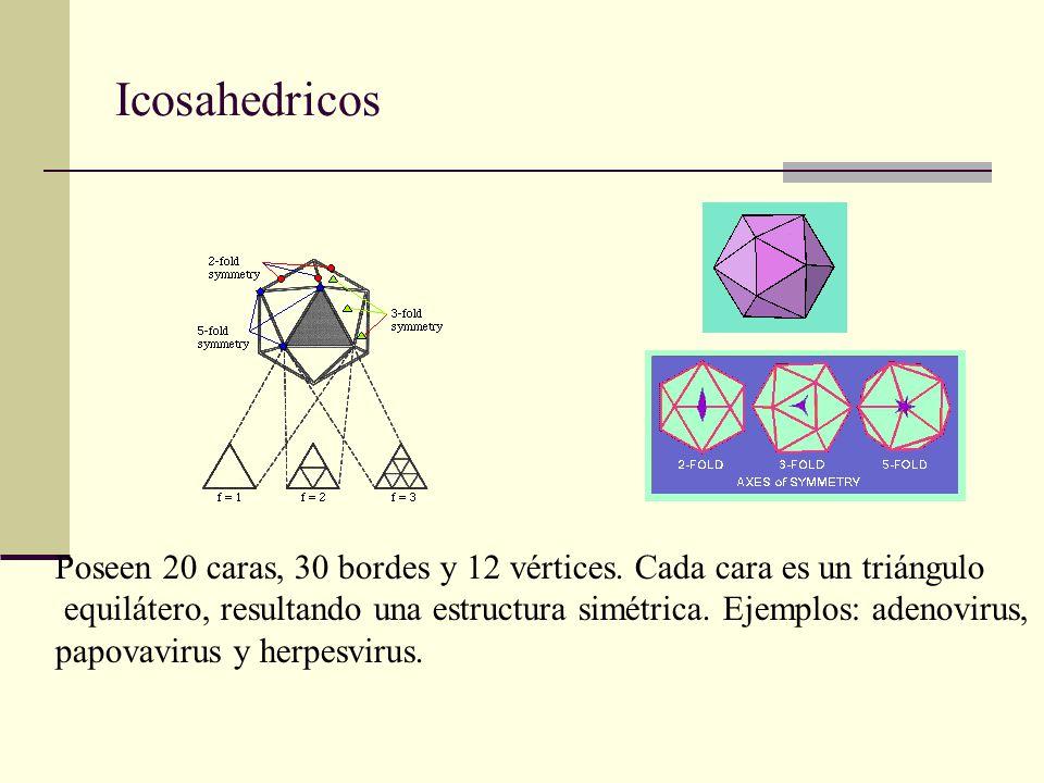 13 Virus Icosaédricos