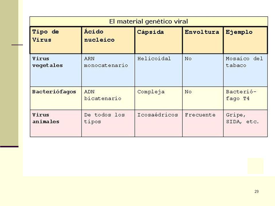 28 Tipos de Virus Dependiendo del tipo de célula al que atacan pueden ser: Virus animales. Virus Vegetales. Profagos.