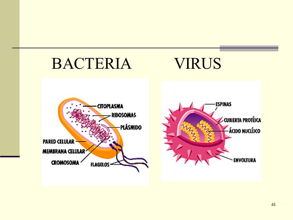 45 Comparación entre Virus y bacterias Ambos son microscópicos. Las bacterias son seres vivos procariontes, en cambio los virus están entre la materia