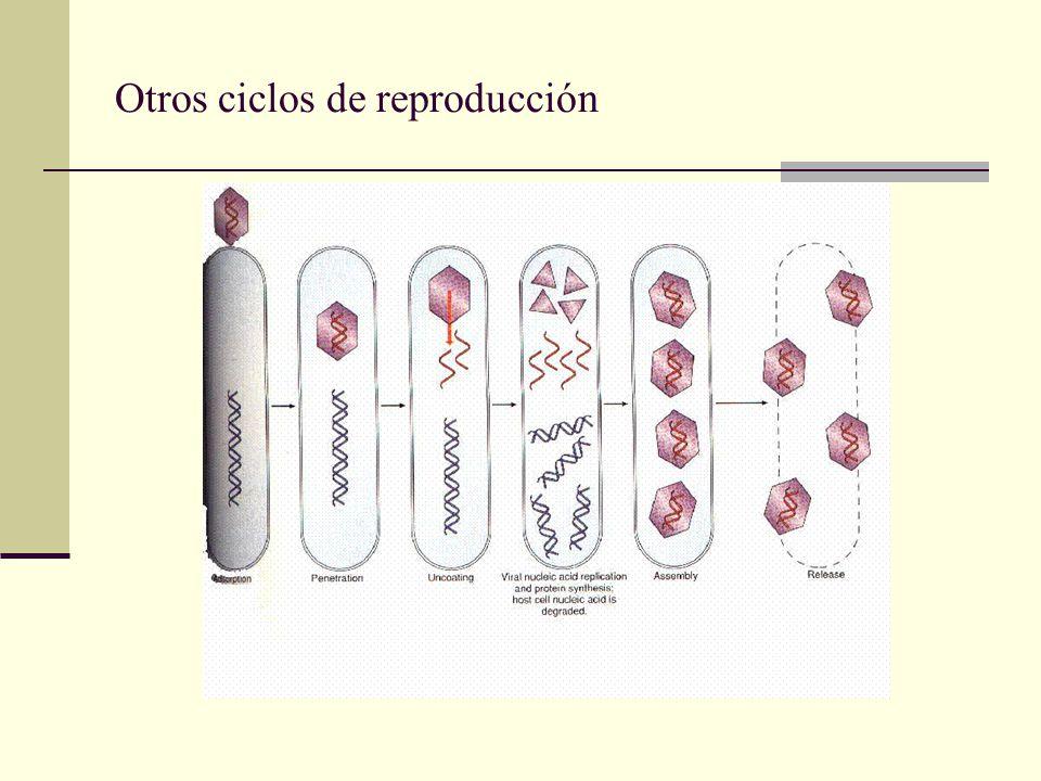 Micrografía de un bacteriófago